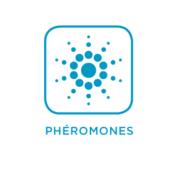 Synanthedon myopaeformis – Sésie du pommier image