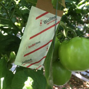 [ INTERVIEW ] How important is Anderline for spider mite control?